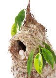 Nest Stock Images