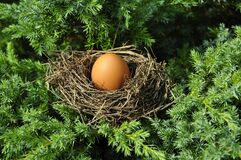 Nest, Bird Nest, Egg, Tree Royalty Free Stock Photos