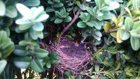 Nest with birds stock photo