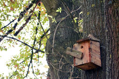 Nest of birds and bird house in tree Royalty Free Stock Photography