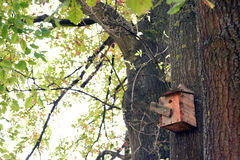 Nest of birds and bird house in tree Stock Photography
