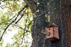 Nest of birds and bird house in tree Stock Images
