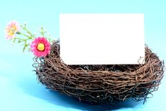 Nest with a blank card Royalty Free Stock Photo