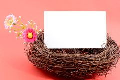 Nest with a blank whtie card Stock Photos