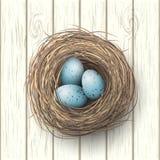 Nest with blue eggs on white wooden background, illustration royalty free illustration