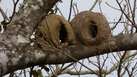 Nest in Bolivia, south America. Stock Photos