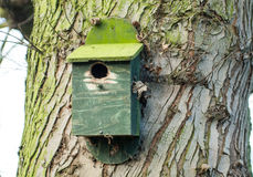 Nest box Stock Photography