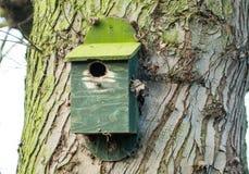 Nest box Stock Photography