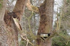 Nest box for little owls in poplar Stock Image