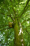 Nest box in tree Stock Image