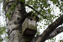 Nest box. Nest box on a tree in the Scandinavian forest royalty free stock photos
