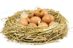 Nest with Brown Chicken Eggs and Cute Little Chicken Isolated on White Stock Images