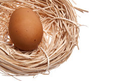 Nest with Brown Egg Royalty Free Stock Photos