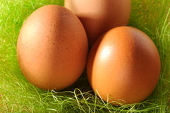 Nest of brown eggs. Nest of three brown eggs Stock Photo