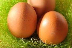 Nest of brown eggs Stock Photo