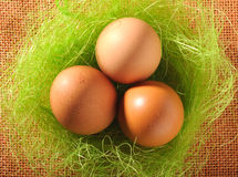 Nest of brown eggs Royalty Free Stock Photo