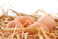 Nest of Brown Eggs. Brown Eggs in a nest of straw Stock Photo