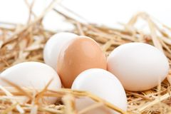 Nest of Brown and White Eggs Royalty Free Stock Image