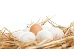 Nest of Brown and White Eggs Stock Images