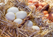 Nest with chicken eggs Royalty Free Stock Photo