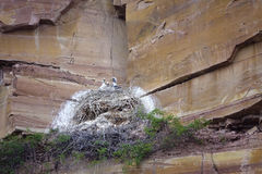 Nest in cliff Royalty Free Stock Photography