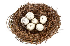 Nest closeup. Royalty Free Stock Photo