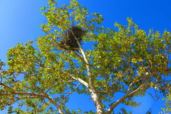 Nest crown on a blue sky background Royalty Free Stock Photo