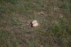 Nest Demoiselle crane steppe in spring steppe Stock Image