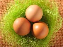 Nest der braunen Eier Lizenzfreies Stockfoto