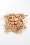 Nest der Brown-Eier Stockbilder