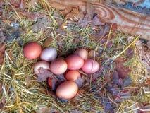 Nest der bunten Eier Stockbilder
