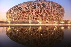 Nest des Peking-Vogels an der Dämmerung Lizenzfreie Stockbilder