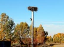 Nest des Storchs unter blauem Himmel lizenzfreie stockfotografie