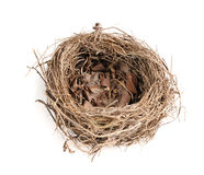 Nest des Vogels über einem weißen Hintergrund Stockfotos