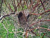 Nest des Vogels Lizenzfreie Stockbilder