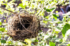 Nest des Vogels Stockfoto
