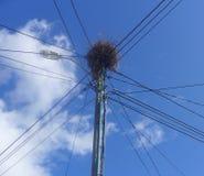 Nest des Vogels Lizenzfreies Stockfoto