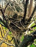 Nest des Vogels Lizenzfreies Stockbild