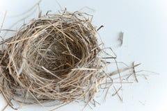 Nest des Vogels stockbilder