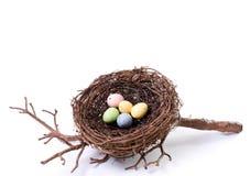 Nest des Vogels mit Pastelleiern Lizenzfreie Stockfotografie