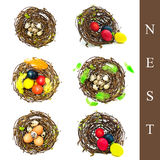 Nest with different eggs Stock Photos