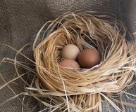 Nest of Dry Grass and Three Brown Chicken Eggs Royalty Free Stock Photography