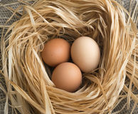 Nest of Dry Grass and Three Brown Chicken Eggs Royalty Free Stock Images