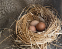 Nest of Dry Grass and Three Brown Chicken Eggs Stock Photos
