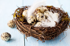 Nest for easter Stock Photography