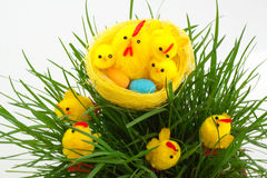 Nest with easter chickens in a grass Royalty Free Stock Image