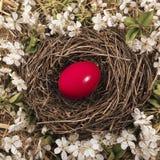 Nest Easter Egg Royalty Free Stock Images
