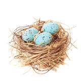 Nest of Easter Eggs Stock Photography
