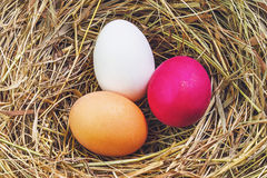 Nest with Easter eggs Royalty Free Stock Image