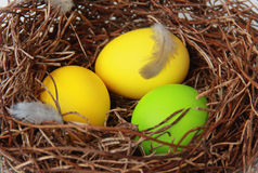 Nest with easter eggs. And feathers Royalty Free Stock Images